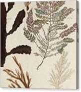 Aquatic Animals - Seafood - Algae - Seaplants - Coral Canvas Print