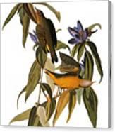 Audubon: Warbler, (1827-38) Canvas Print