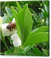 Australia - The Bees Canvas Print
