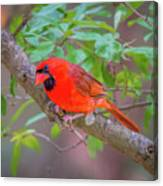 Cardinal Birds Hanging Out On A Tree Canvas Print