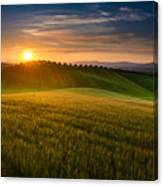 Cereal Fields Canvas Print