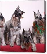 5 Christmas Schnauzers Canvas Print
