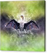 Cormorant Dries Its Wings Canvas Print