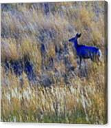 Deer Outdoors. Canvas Print