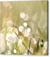 Dew In Grasses Canvas Print