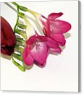 Freesia And Tulip Canvas Print