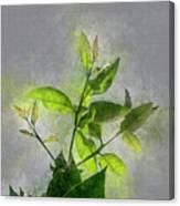 Fresh Growth Of Healthy Green Leafs  Canvas Print
