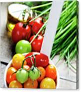 Fresh Tomatoes Canvas Print