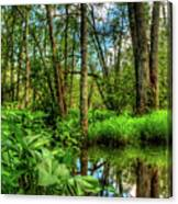 Great Swamp Canvas Print