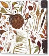 Herbarium Specimen Canvas Print