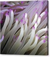 Micronesia, Marine Life Canvas Print