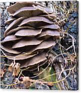 Mushroom Art Canvas Print