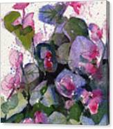 My Annual Begonias Canvas Print