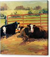 5 O Clock Cows Canvas Print