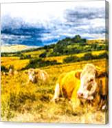 Resting Cows Art Canvas Print