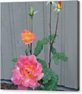 5 Roses In Rain Canvas Print
