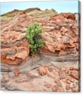 Sandstone Color In Valley Of Fire Canvas Print