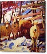 5 Sheep Canvas Print