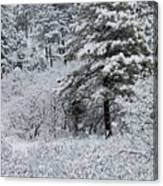 Snowstorm In The Pike National Forest Canvas Print