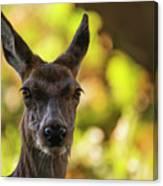 Stunning Hind Doe Red Deer Cervus Elaphus In Dappled Sunlight Fo Canvas Print
