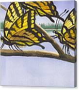 5 Swallowtails Canvas Print