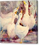 5 White Geese Canvas Print
