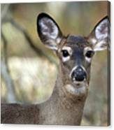 White Tailed Deer Smithtown New York Canvas Print