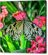 5050- Butterfly Canvas Print