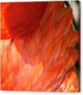 5060- Flamingo Canvas Print