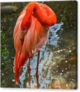 5182- Flamingo Canvas Print