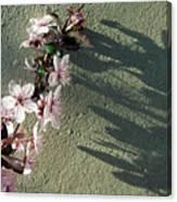 Tree Blossoms Canvas Print