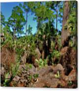 55- Everglades Afternoon Canvas Print