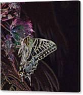 5818 3 Canvas Print