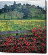 5b6301 Vineyards Of Color Canvas Print