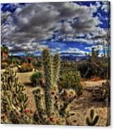 Anza-borrego Desert State Park Canvas Print