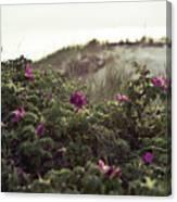 Rose Bush And Dunes Canvas Print
