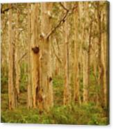 Boranup Forest II Canvas Print