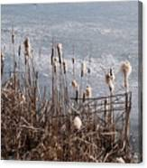 Bulrush Canvas Print