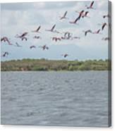 Colombia Sanctuary Of Flamingos Near Riohacha Canvas Print