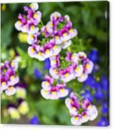 Flowering Garden.  Canvas Print
