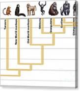 Human Evolution Canvas Print