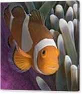 Malaysia, Marine Life Canvas Print
