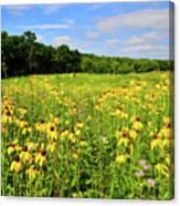 Marengo Ridge Wildflowers Canvas Print