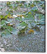 6 Mile Swamp Canvas Print