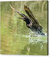 Neotropic Cormorant Canvas Print