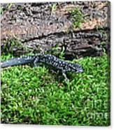 Slimy Salamander Canvas Print