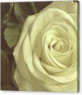 Timeless Rose Canvas Print