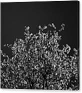 Treetop Canvas Print