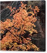Zion Autumn Foliage Canvas Print