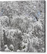 Snow And Branches Canvas Print